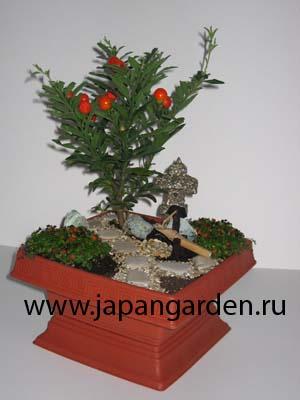Комнатный японский сад с живыми